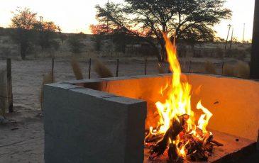 Kameelboomkoelte-Kalahari-62-1-365x230